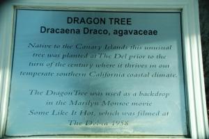 Famous Dragon Tree