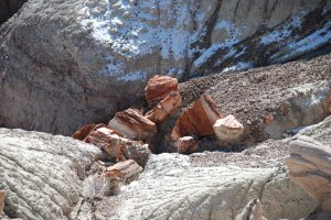 Petrified Log (2)