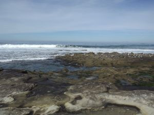 BEACH SEGULLS AND TIDE POOLS H 800