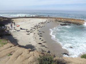 Children's Pool taken over by seals