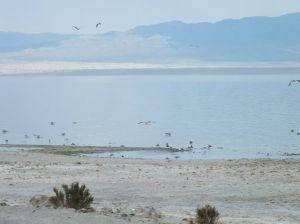 Birds Feasting on Dead Fish