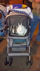 Everybody or every bunny has fun at the Farmers Market and yes that's a bunny stroller.