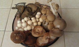 The mushroom sampler is a favorite!