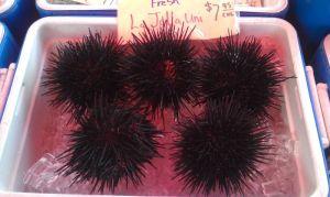 A living breathing sea urchin!