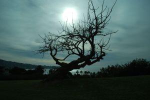 Tree at Sunset - California