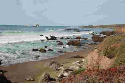 Point Piadras Blancas Elephant Seal Rookery