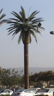 UTILITY TREE AT LAS AMERICAS SAN YSIDRO BT