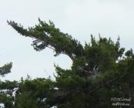 EAGLE'S NEST
