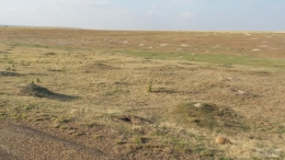 PRAIRIE DOG HAVEN -- ACRES AND ACRES